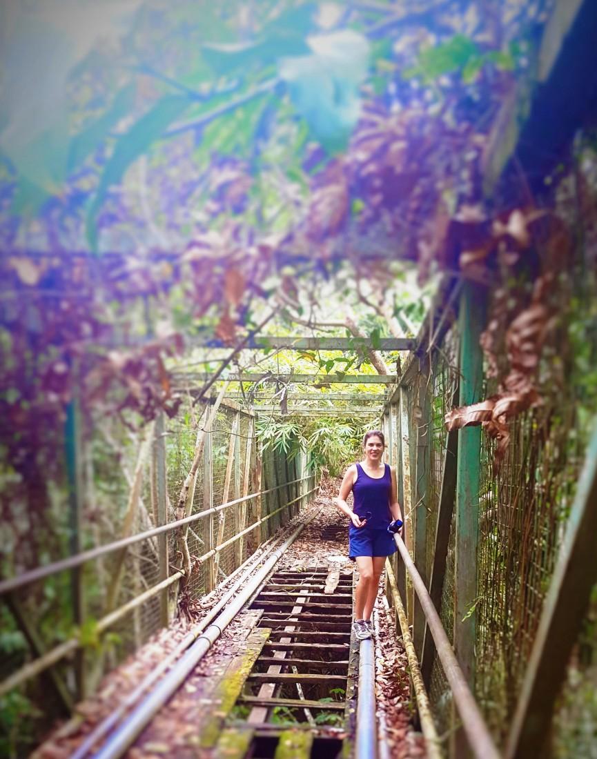 Bridge over forest ravine in Pertamina complex.Balikpapan rainforest (3)