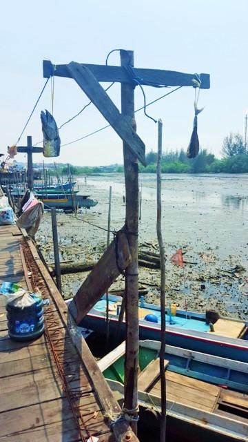 Cycling arund mangrove swamps.Balikpapan (10)
