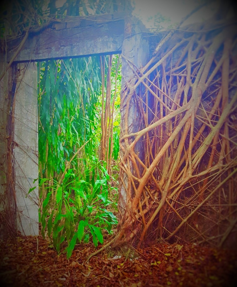 Rain forest living room.kalimantan indonesia