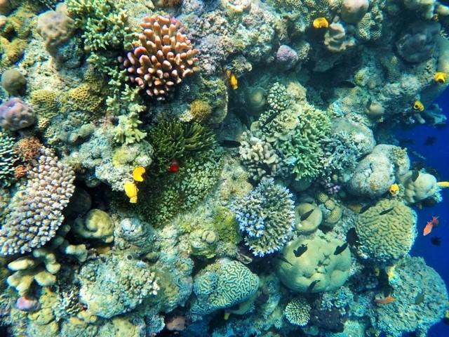 Bunaken Reefs in Manado, Indonesia. Go Pro