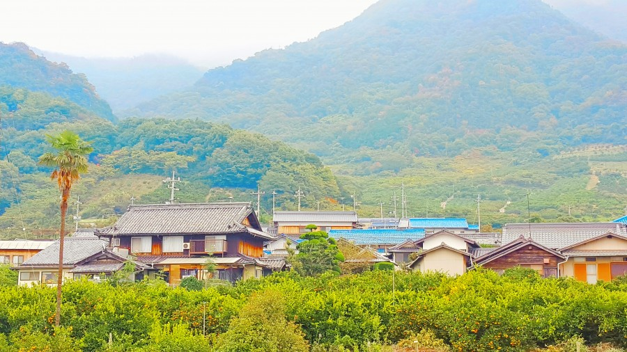 Orange Groves and Mountains of the Seto Inland Sea Isles, Japan