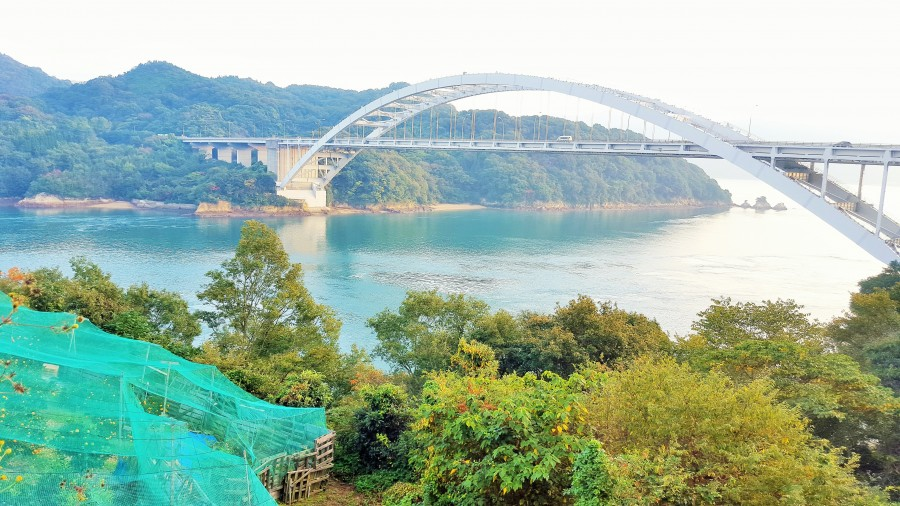 Orange groves overlooking the Seto Inland sea and bridge with cycling lane