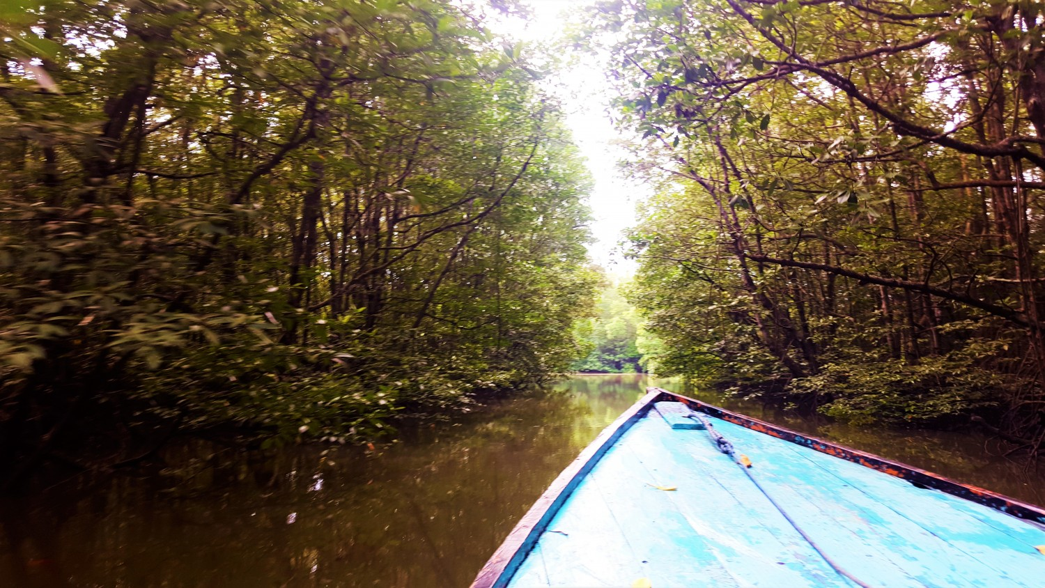 Boat through the mangroves to spy proboscis monkeys. Balikpapan, Indonesia