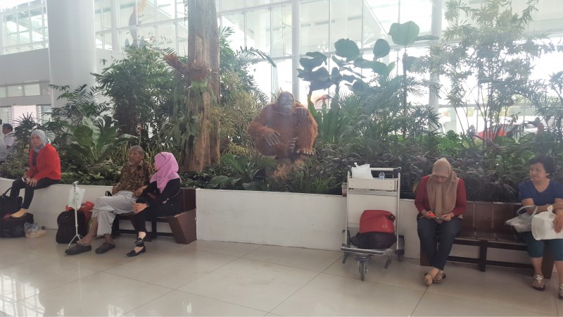 Bizarre jungle display of Oranghutan at Balikpapan Airport, Kalimantan, Indonesia